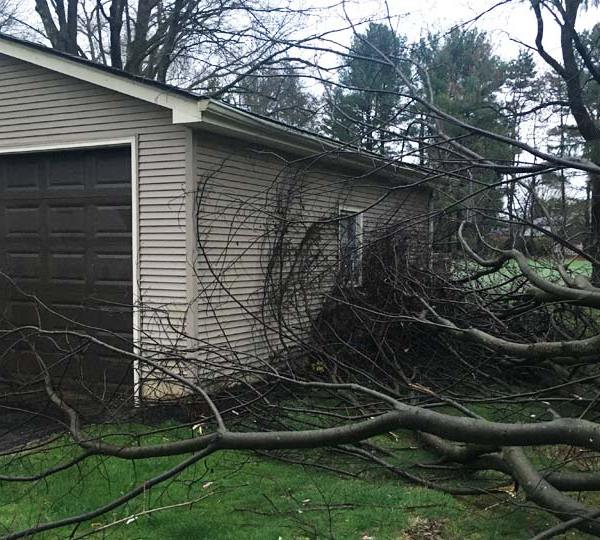 Tree struck by lightning, Columbiana