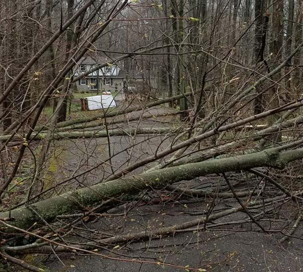 Trees down Cortland