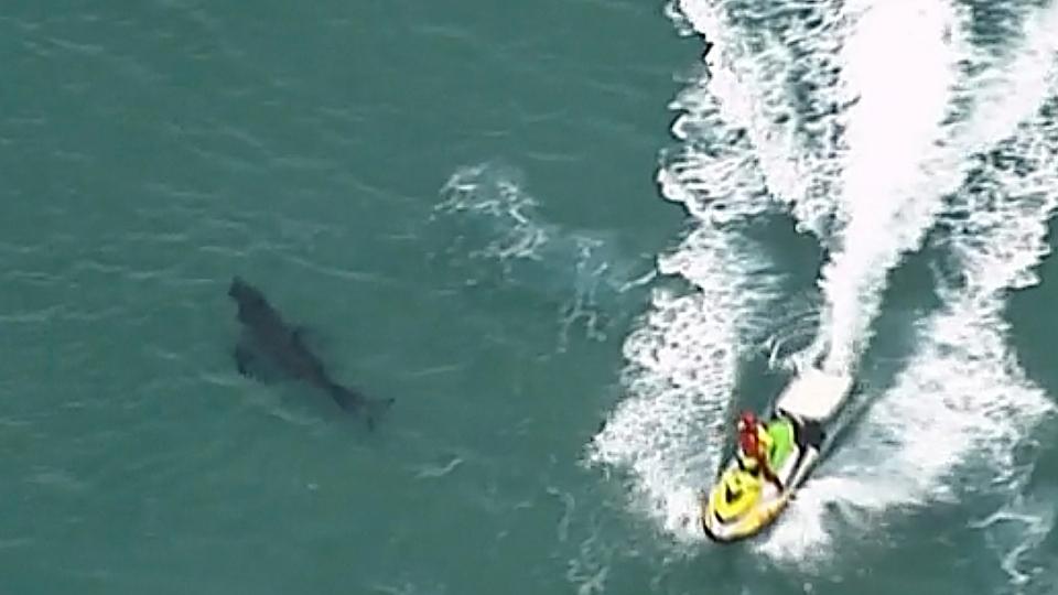 10-foot great white shark kills surfer in Australia.