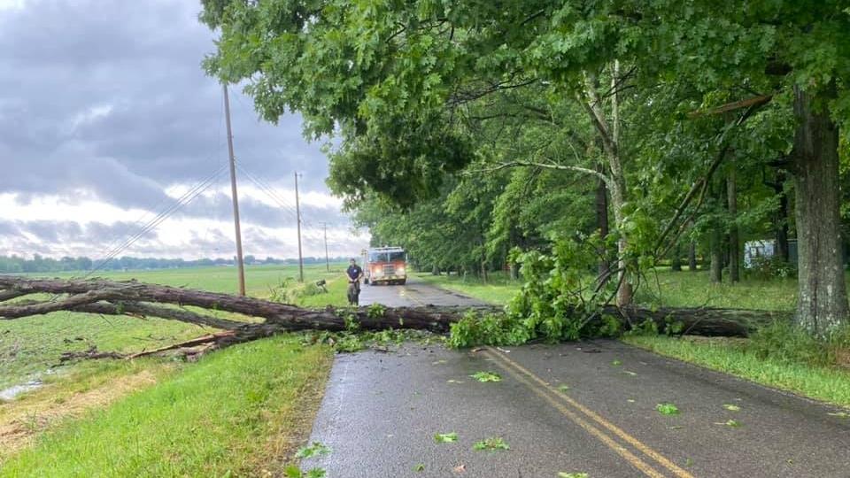 Tree down on Salt Springs Road in Newton Falls.