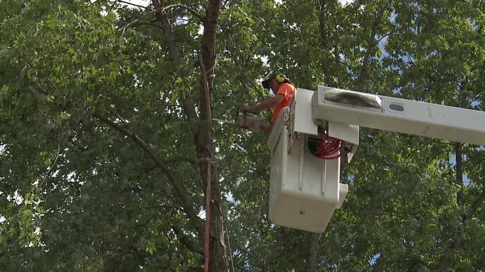 T&D Tree Service