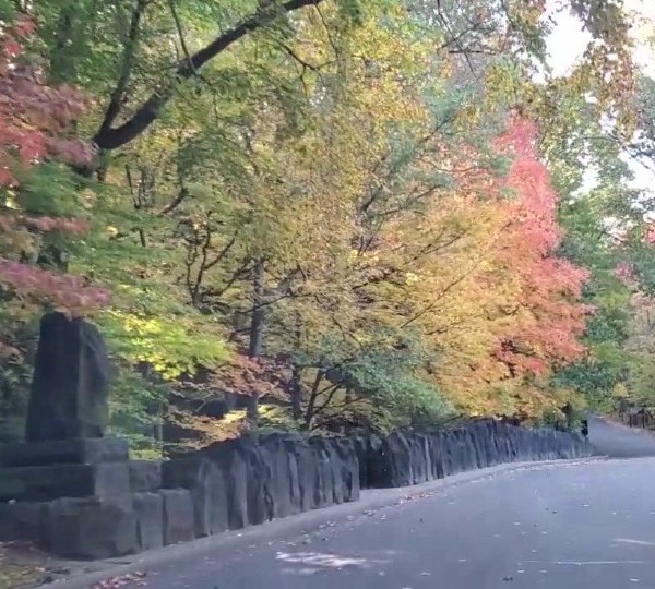 fall foliage in the valley