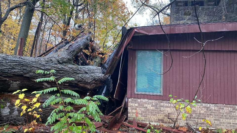 A family in Howland woke up around 5:40 a.m. Thursday to a tree that fell into their home on Quarry Lane.