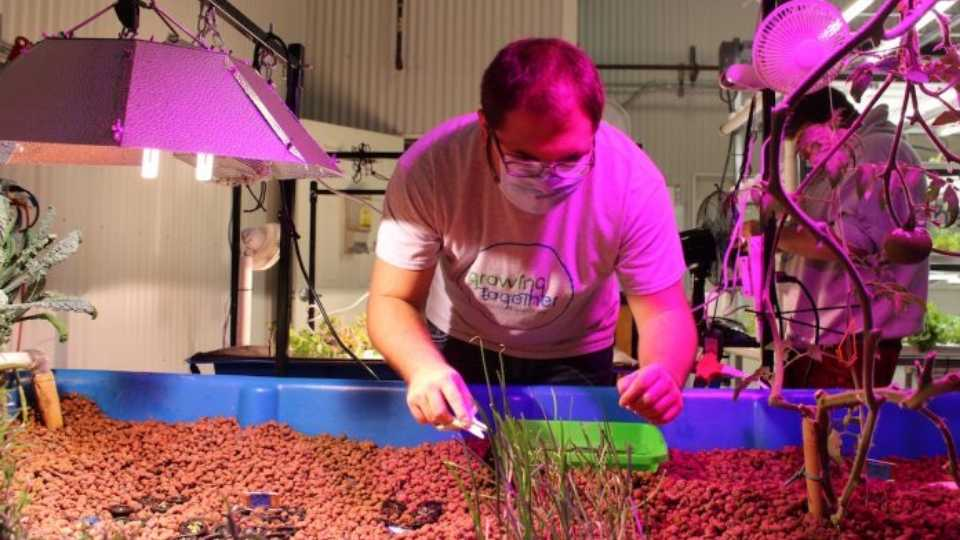 Kirkland Campbell harvests chives for from a media bed Nov. 11 in one of the Growing Together Aquaponics systems, housed in North Country Brewing Company's canning facility, in Slippery Rock, Pennsylvania.