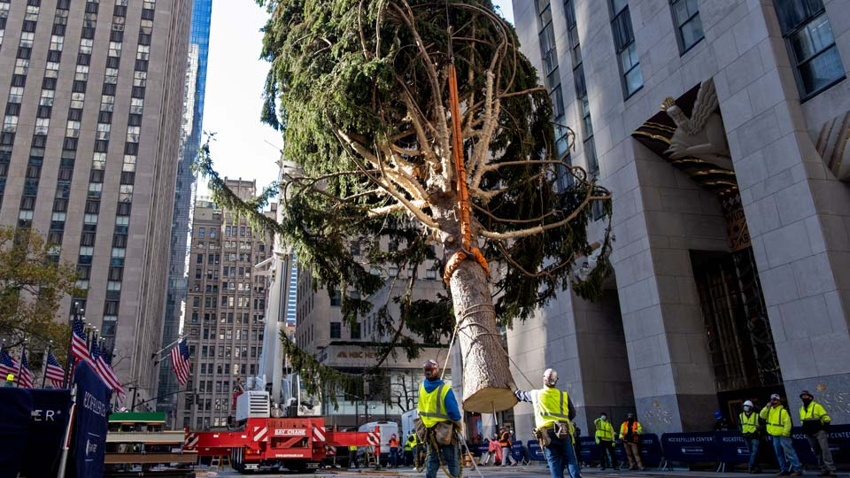 In this Saturday, Nov. 14, 2020, file photo, the 2020 Rockefeller Center Christmas tree, a 75-foot tall Norway Spruce that was acquired in Oneonta, N.Y., is suspended by a crane as it's prepared for setting on a platform at Rockefeller Center in New York.