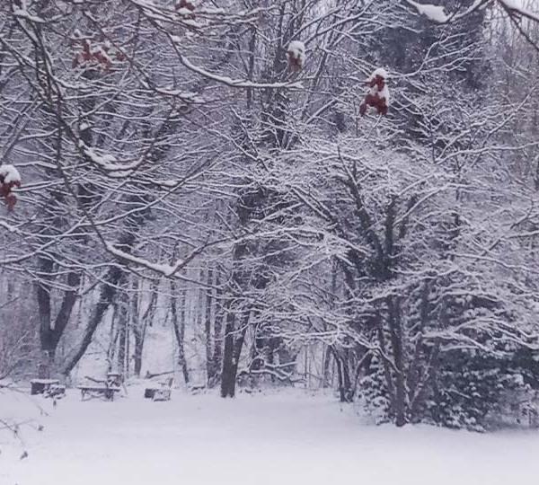 Campbell Snowfall