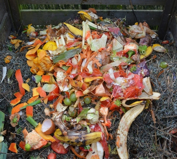 Compost, vegetables, fruits