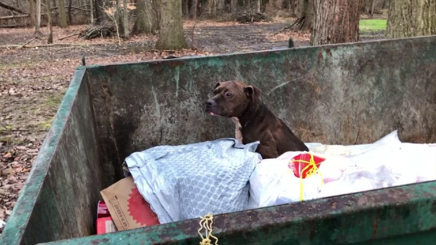A dog that was thrown out like a piece of garbage in a dumpster was found alive. Humane agents say there's no way the animal got there by herself.