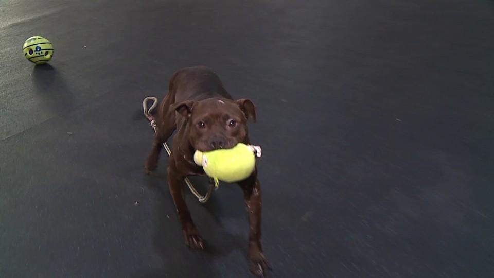 Phoenix, Warren dumpster dog