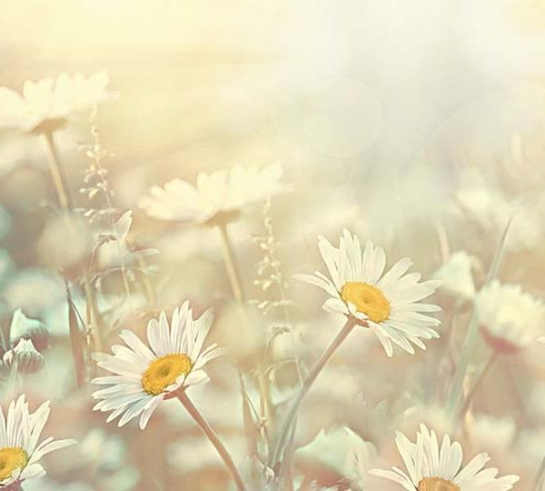 Spring flowers in sunlight.