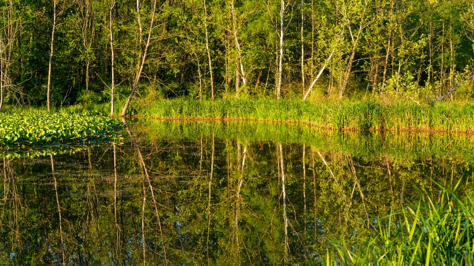 Beaver Marsh, Cuyahoga Valley National Park