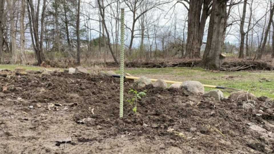 Vayda planted her blueberry bush in a sunny spot near a creek with well-drained soil. (Sara Welch photo)