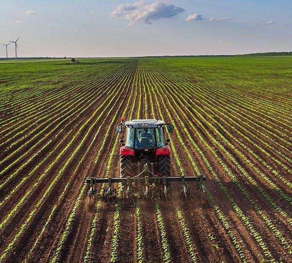 Farming, crops, fields