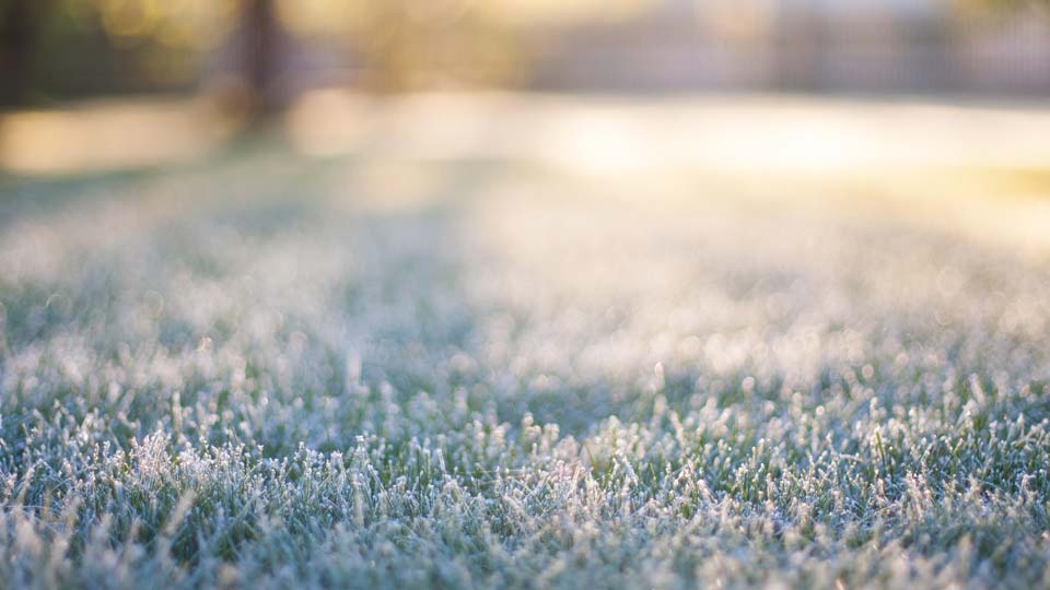 Frost, cold, Spring Weather