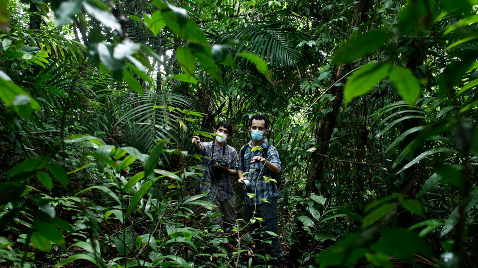 Biologists Claudio Monteza, right, and Pedro Castillo, look for a place to install a camera in a dense tropical rainforest in San Lorenzo, Panama, Tuesday, April 6, 2021
