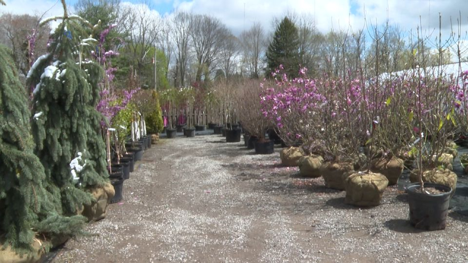 Planting season kicked off in early April, but now that the weather has turned bitter cold with snow flurries, are those flowers, fruits, and trees in trouble?