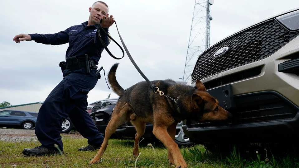 Virginia State Police K-9 officer Tyler Fridley, works his dog Aries at State Police headquarters in Richmond, Va., Monday, May 10, 2021. Drug-sniffing police dogs from around Virginia are being forced into early retirement as the state prepares to legalize adult recreational use of marijuana on July 1