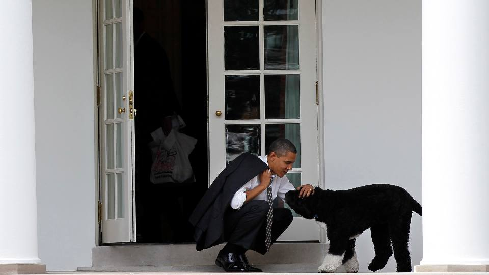 In this March 15, 2012 file photo, President Barack Obama pets the family dog Bo, a Portuguese water dog, outside the Oval Office of the White House in Washington. Former President Barack Obama's dog, Bo, died Saturday, May 8, 2021, after a battle with cancer, the Obamas said on social media.