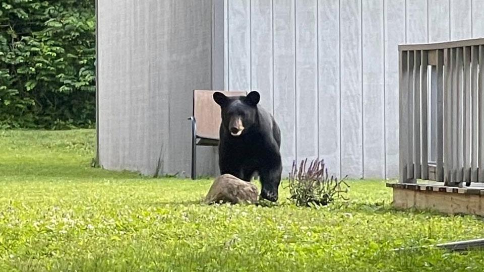 Bear spotted near First Christian Church in Salem