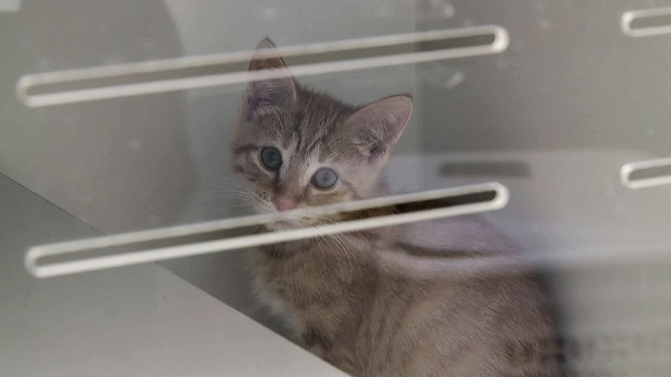 Several local animal shelters are looking for people willing to take in homeless animals since they're running out of space at their facilities.