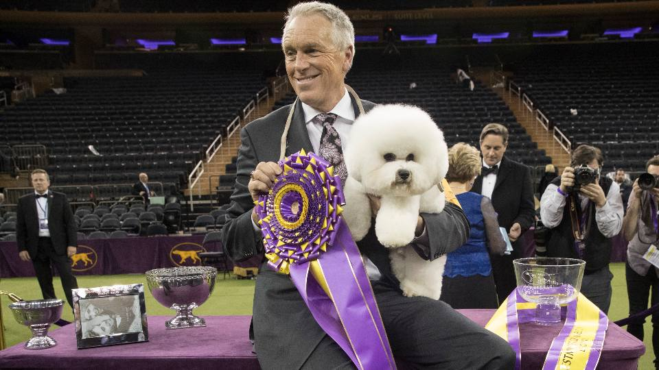 In this Feb. 13, 2018, file photo, handler Bill McFadden poses for photos with Flynn, a bichon frise, after Flynn won best in show during the 142nd Westminster Kennel Club Dog Show, Tuesday, Feb. 13, 2018, at Madison Square Garden in New York. McFadden, who has guided two Westminster winners, was rear-ended and injured while driving a van full of dogs cross-country to the show, his wife and fellow star handler, Taffe McFadden, said Saturday, June 12, 2021.