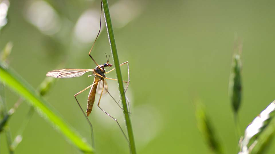As summer continues, mosquito spraying resumes in Mahoning County