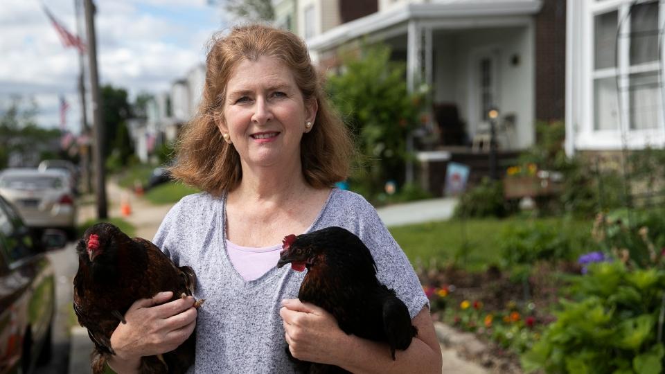 Philadelphia backyard chickens are surging despite city law