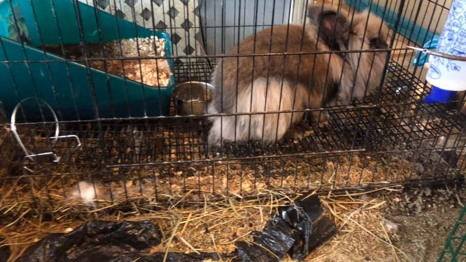 Animal Charity of Ohio rescued several bunnies and a bearded dragon in an animal hoarding case July 2