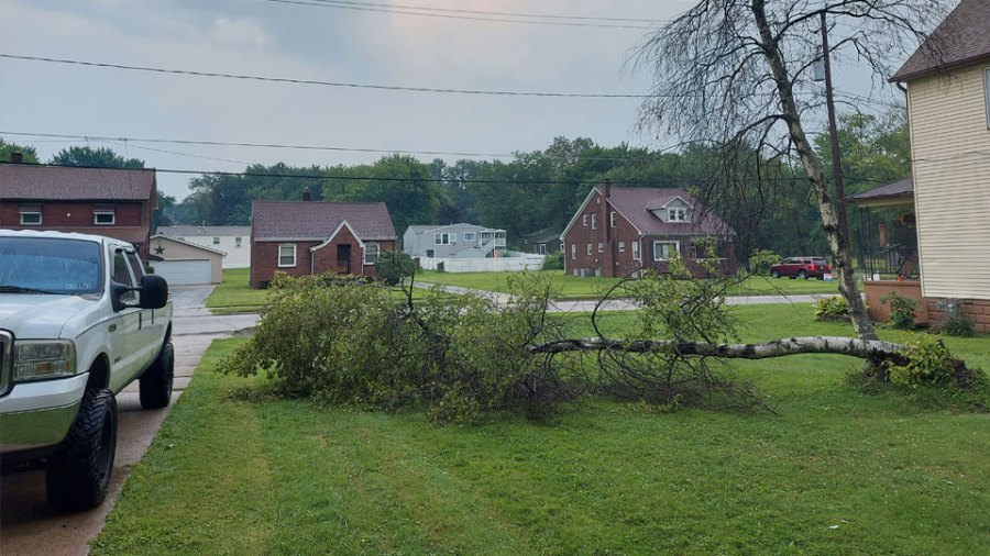 Campbell tree down