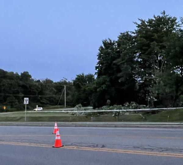 Hermitage trees down from severe weather
