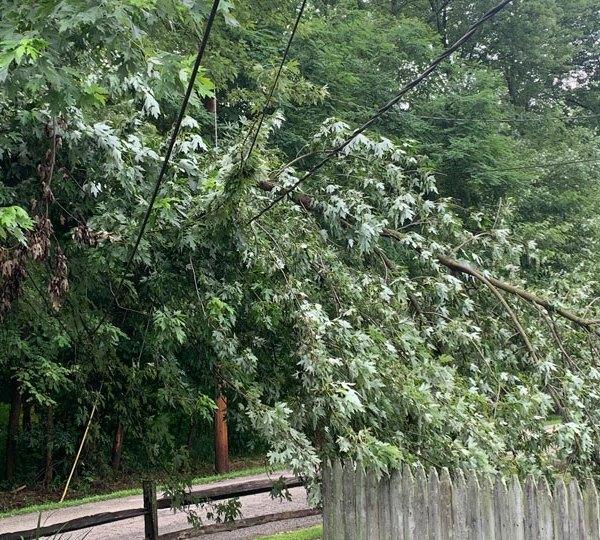 Leavittsburg tree on power lines