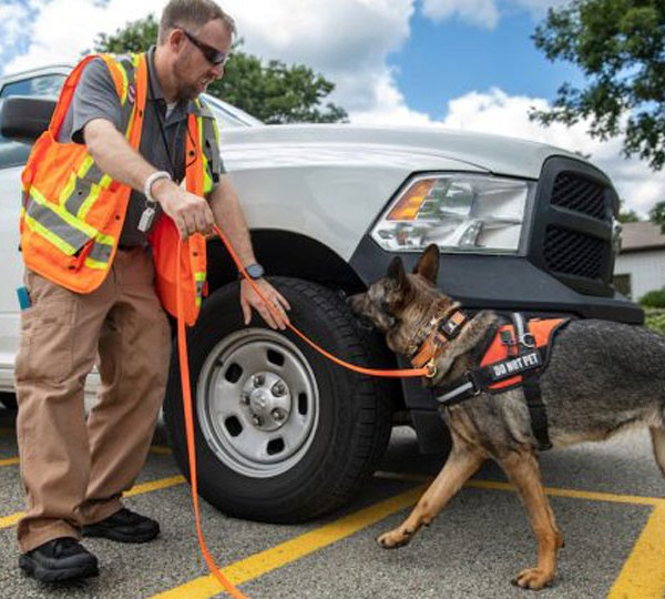 Lucky, a German shepherd trained to detect the scent of spotted lanternfly egg masses at Eichenlaub Inc. in Allegheny County, on Tuesday, June 22.