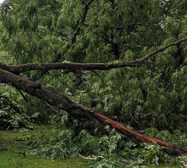 Sandy Lake, PA toppled trees