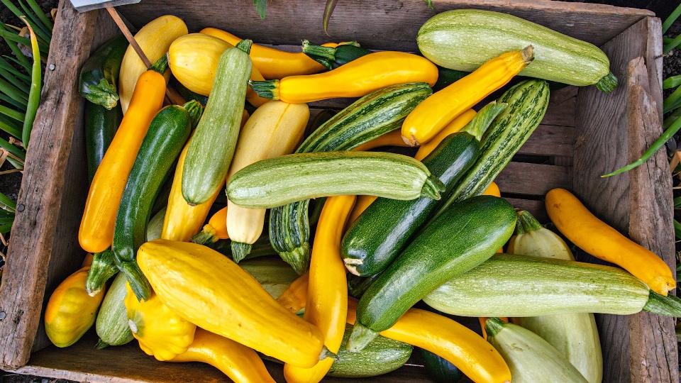 Squash, zucchini in crate