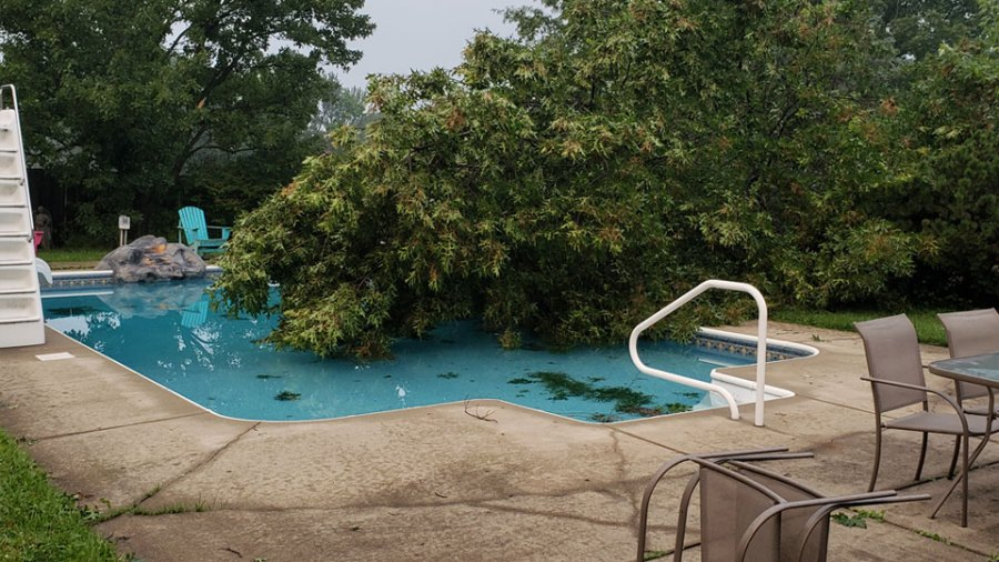 Campbell tree into pool