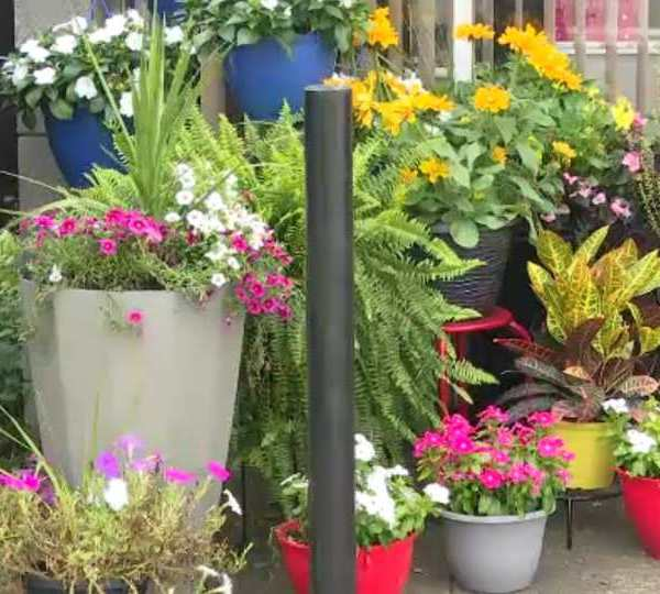 A Warren business owner is looking for justice after over $700 worth of plants and pots were stolen from her business Sunday.