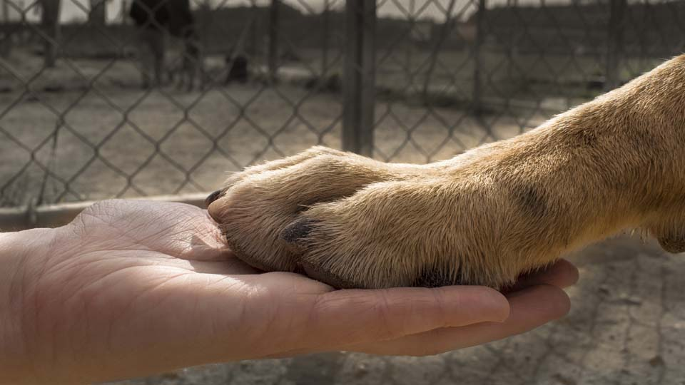 Human hand, dog paw