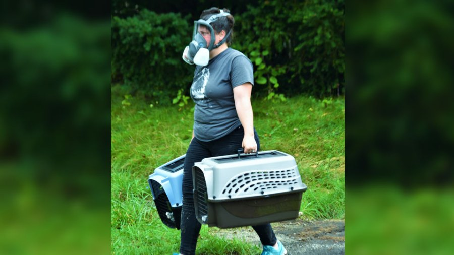 A worker from Animal Charity Thursday carries two kittens out of a 166 W. Earle Ave. home that was being demolished because of a hoarding situation. Humane agents removed at least nine cats and a dog from the home. All of the animals were in good condition.