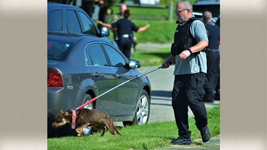 A member of the Mahoning County Dog Warden's Office Wednesday takes one of two dogs from a home on North Bon Air Avenue that was found after members of the Mahoning Valley Crisis Response Team searched a home as part of a murder investigation.