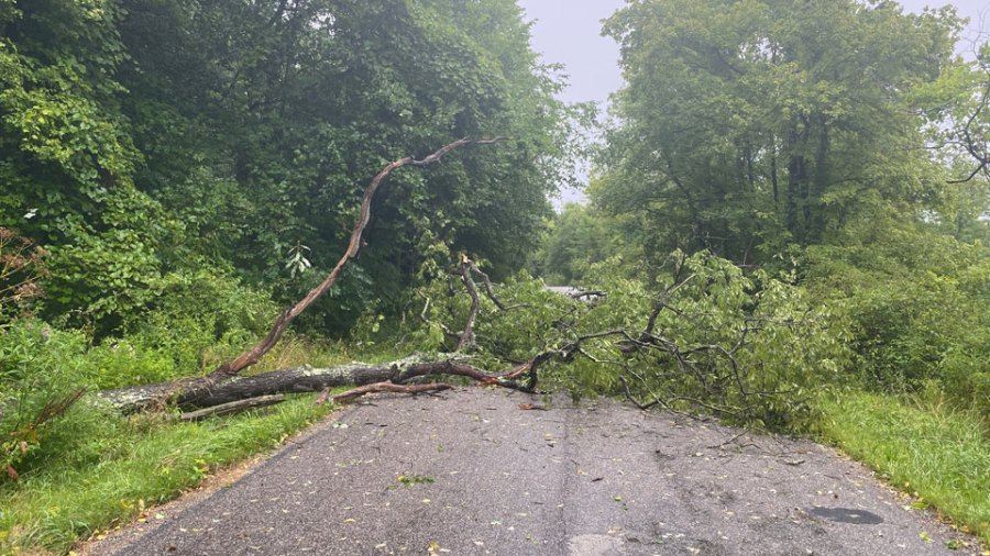 Tree down, Hubbard, Ohio