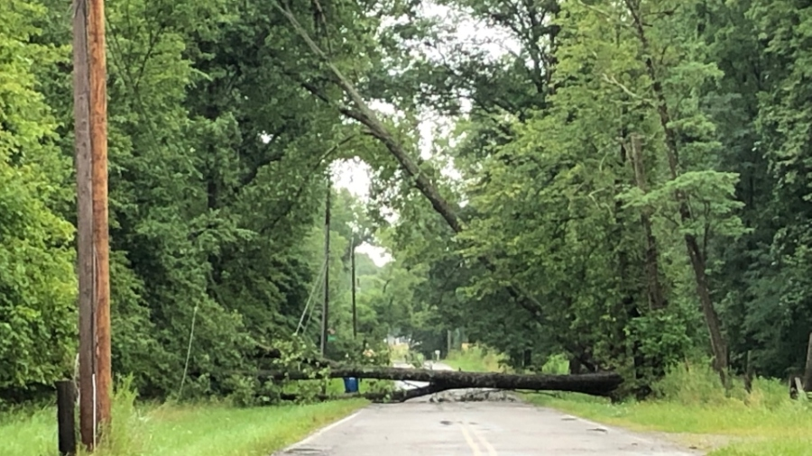 Trees and wires down along Carson Salt Springs Road in Newton Falls
