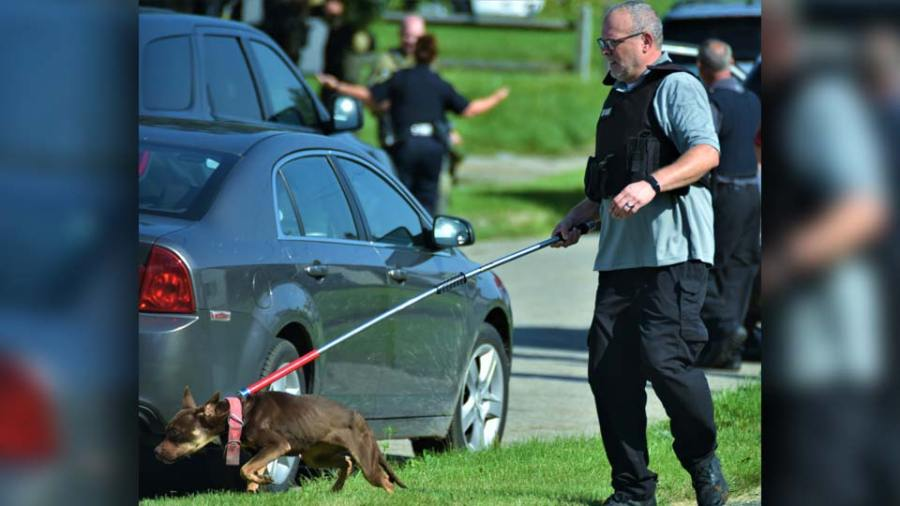 A member of the Mahoning County Dog Warden's Office Wednesday takes one of two dogs from a home on North Bon Air Avenue that was found after members of the Mahoning Valley Crisis Response Team searched a home as part of a murder investigation. (WKBN Photo/Joe Gorman)