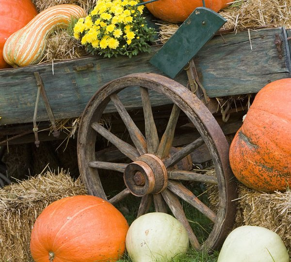 Fall events, Fall theme, generic (3)