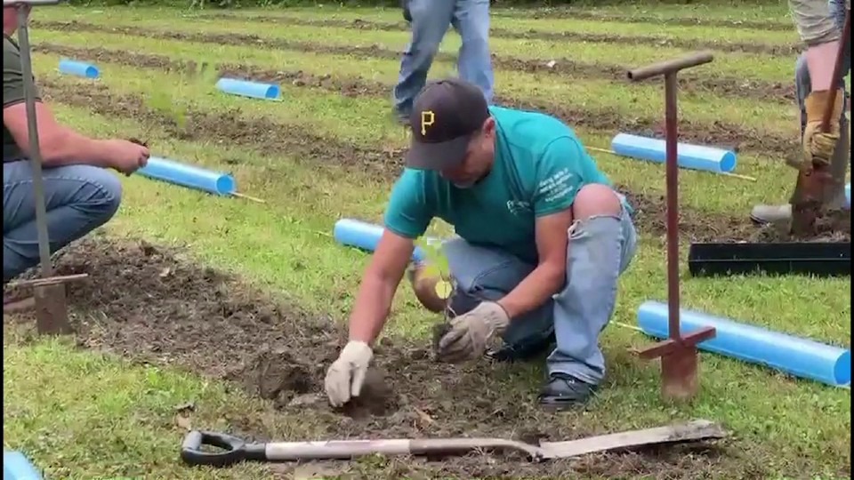 FirstEnergy planting trees in Buhl Park