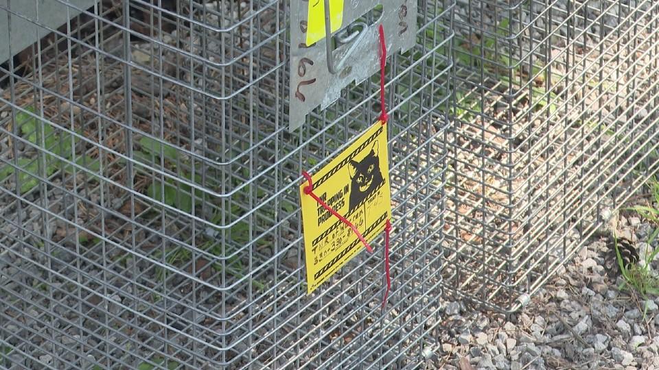 TNR of Warren cat traps