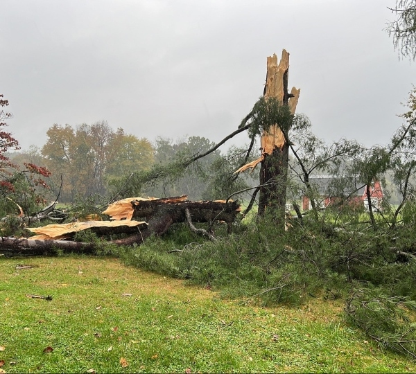 A Hubbard woman was riding her tractor when a tree was struck by lightning and fell.