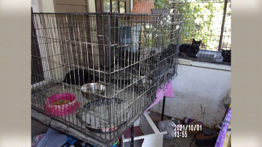 Animal removal and child endangering investigation in Niles 2