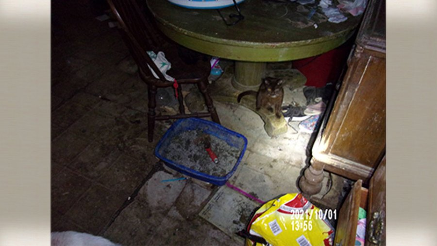 Animal removal and child endangering investigation in Niles 4