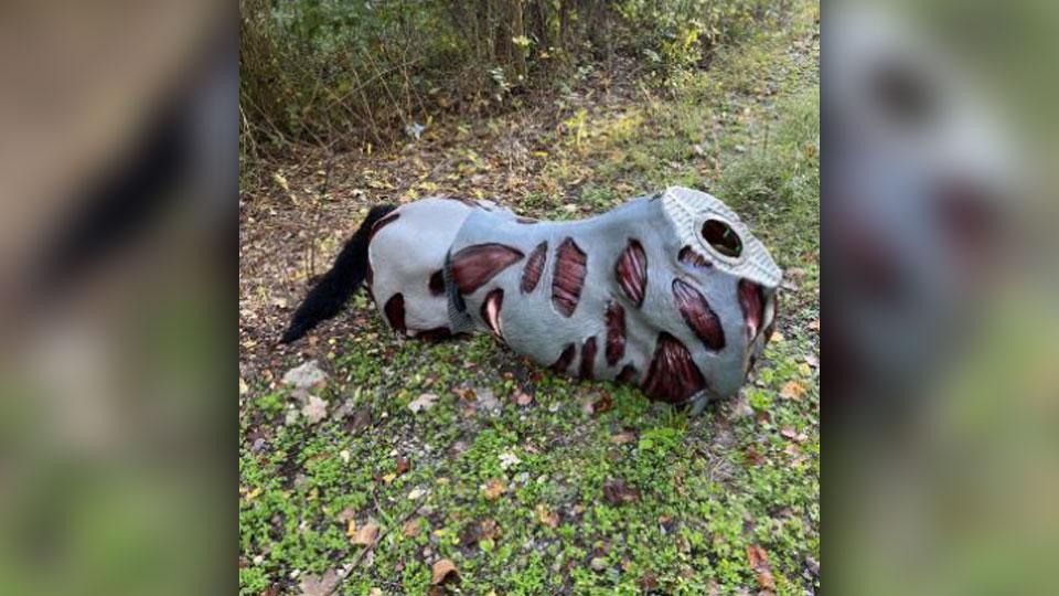 Stolen zombie horse body